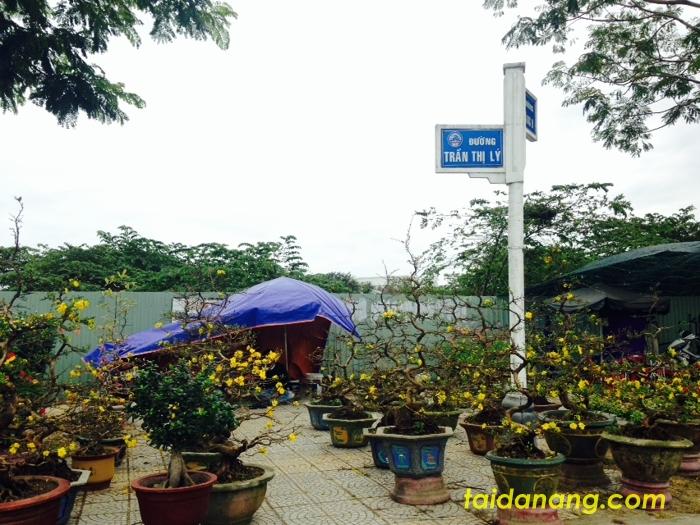 Khu vực hoa ngã tư đường Trần Thị Lý