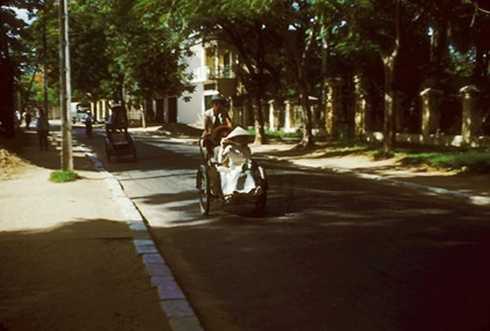 Những chiếc xích lô trên con đường rợp bóng cây