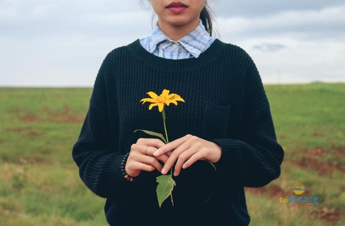Le hoi hoa mai anh dao 2017