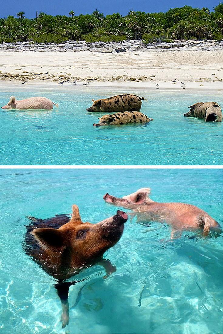 Exuma (bai bien lon), bahamas