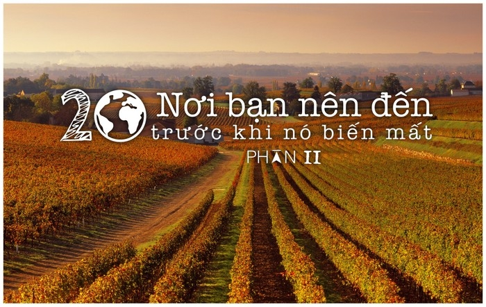 vuon nho Bordeaux, phap